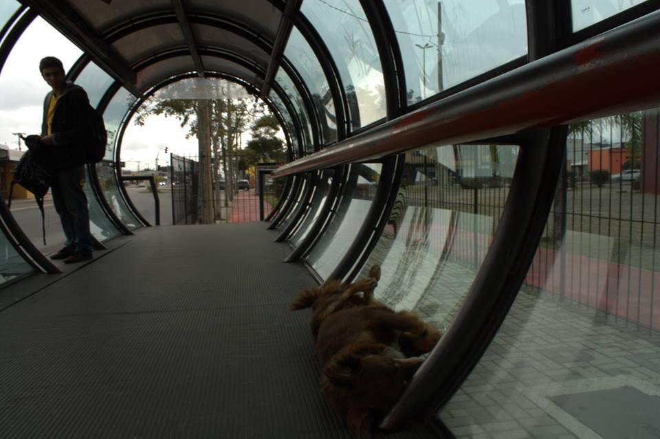 Alguns cães chegam a entrar nos tubos para evitar o frio Foto: Camila Beatriz Costa