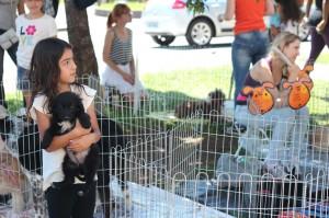 Feira não tem intenção de vender animais Foto: Bruno Dal Piccolo