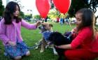 Os cachorros que estão para adoção andam com bexiga de gás hélio para a identificação. Foto: Renata Martins