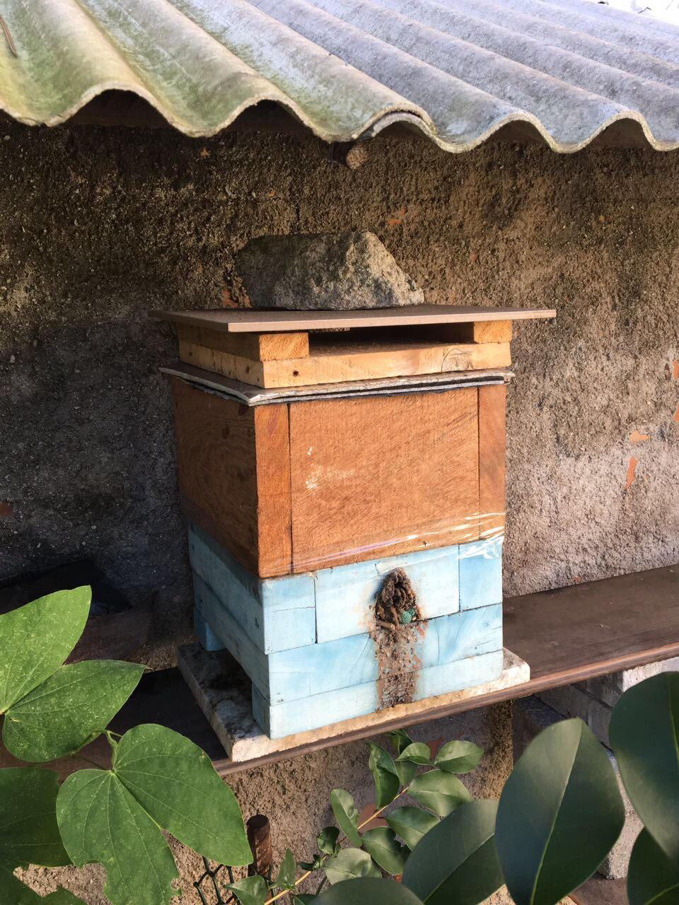 cultivo de abelhas em casa